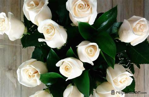 imagenes de rosas blancas naturales delicado ramo de rosas blancas en regalador com
