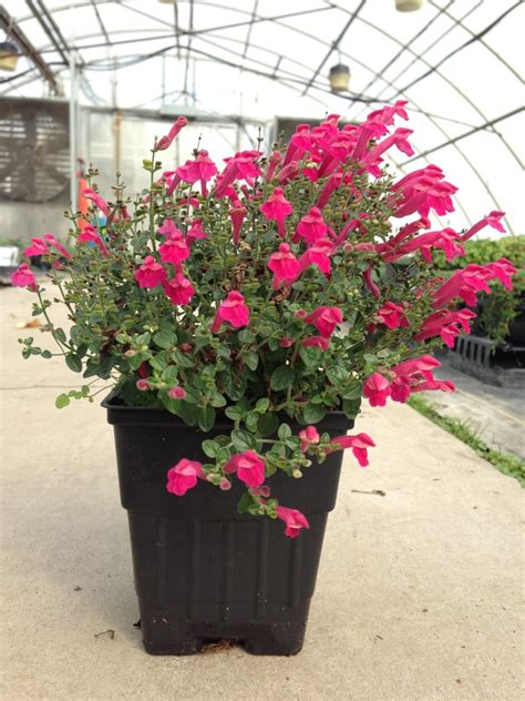 Perennial Planters by Center Greenhouse Product Sizing Guide