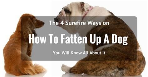 how to fatten up a puppy the 4 surefire ways on how to fatten up a 2017 edition