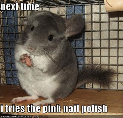 Funny Nail Memes - nails that have funny quotes quotesgram