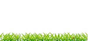 Backyard Food Chain Grass Next Cc