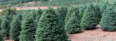 christmas tree farm redland oregon best 28 oregon tree types real trees a choice in the pacific