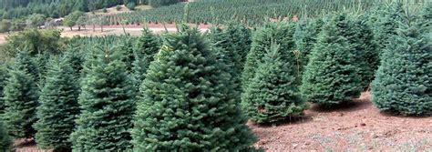 oregon christmas tree types