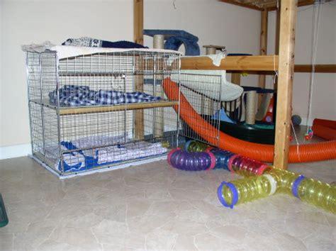 ferret house ferret care