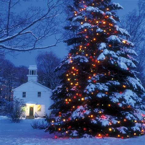 large outdoor tree lights let there be lights martha stewart