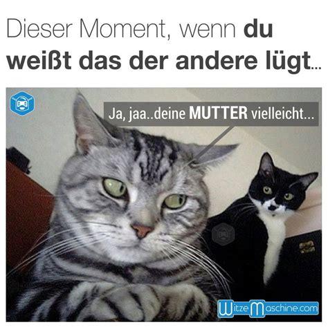 Katzen Meme - 220 ber 1 000 ideen zu katzen memes auf pinterest lustige