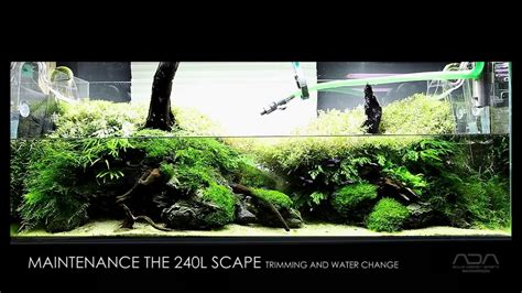 aquascape maintenance maintenance the 240l aquascape youtube