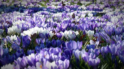 Blume Kleine Blaue Blüten 1118 by Die 61 Besten Hintergrundbilder Blumen