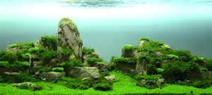 the best aquascape the world s catalog of ideas