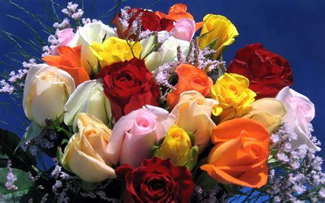all best picos poze desktop flori buchete de flori imagini desktop flori poze imagini desktop