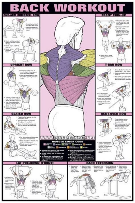 back workout chart healthy fitness exercises