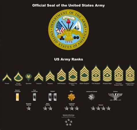 navy seal rating patches and seals vectored