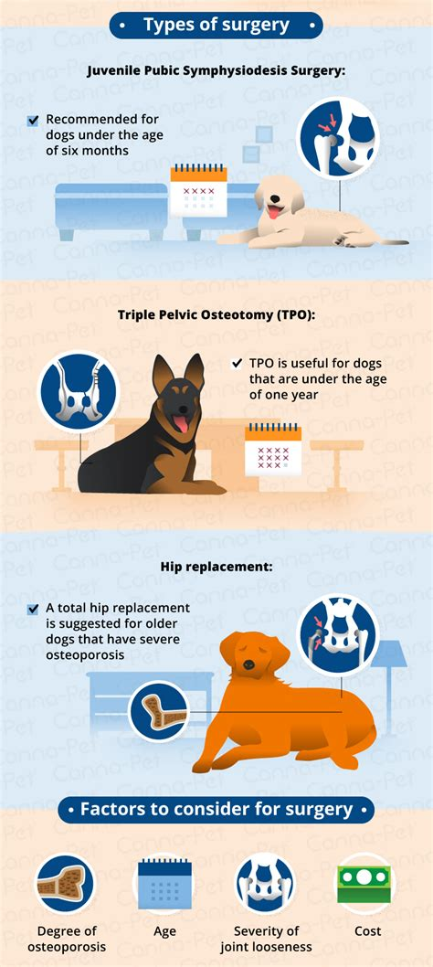 hip dysplasia in rottweilers treatment hip dysplasia in dogs causes treatment more
