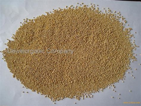 organic white millet unhulled products china organic