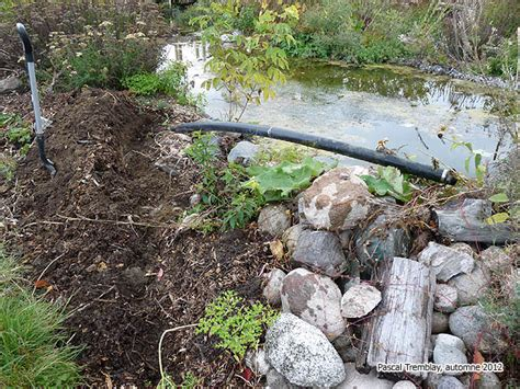backyard pond diy pictures water gardening project ideas
