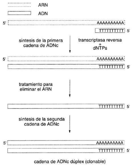 comparar cadenas en c sharp iii aislando genes casos de la vida real