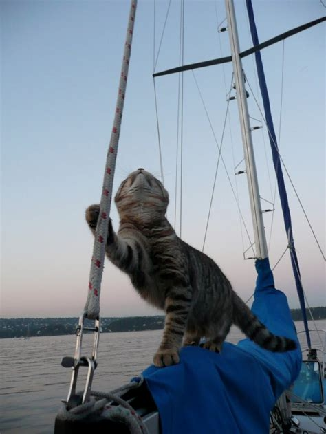 living on a boat with cat cats make great sailors 26 photos click here the ocean