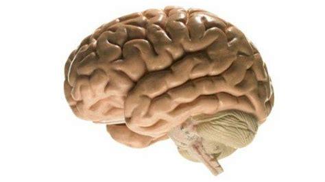 imagenes reales cerebro humano sonhar com c 233 rebro meu sonhar