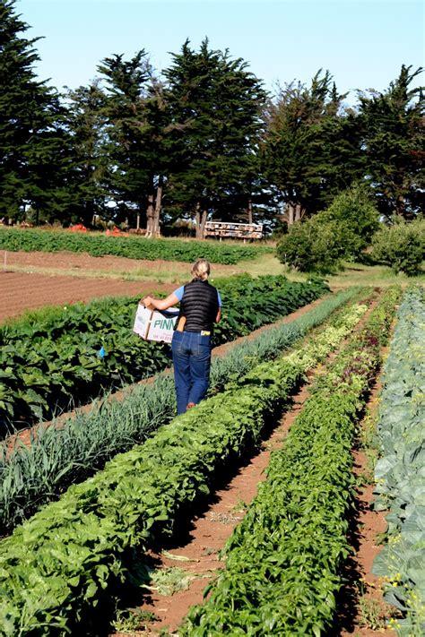 Gardens Farm by Grow A Farmer About The Ucsc Farm Garden