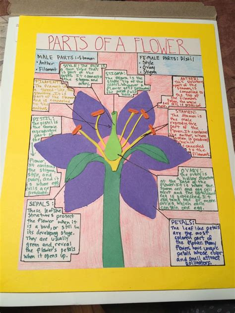7th grade bangs ideas parts of a flower poster project for 7th grade science