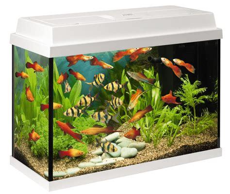 aquariums zonder meubel juwel rekord 700 wit