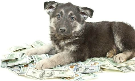 how much do dogs cost per year how much does your cost you per year