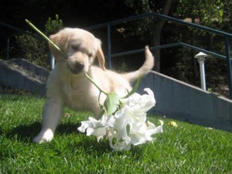 animali con fiori foto cani e gatti con fiori