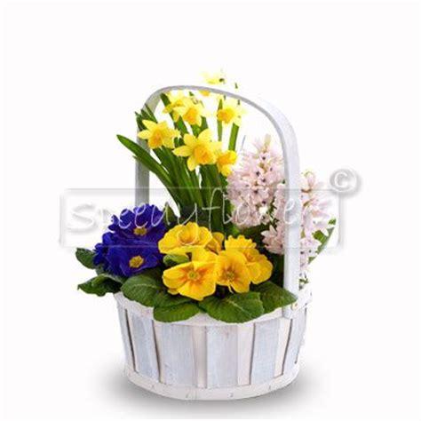 piante primaverili fiorite inviare fiori consegna fiori domicilio