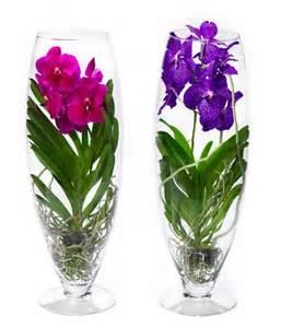 Vanda Vase Vanda Belle Orchid 233 E Exclusive Dans Un Verre De Champagne