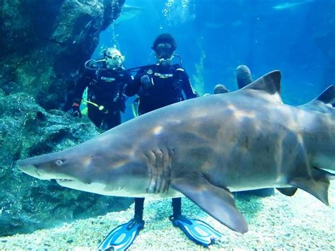 dive shark dive with sharks in bangkok thailand