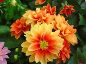 plantes et fleurs du jardin les jardins d