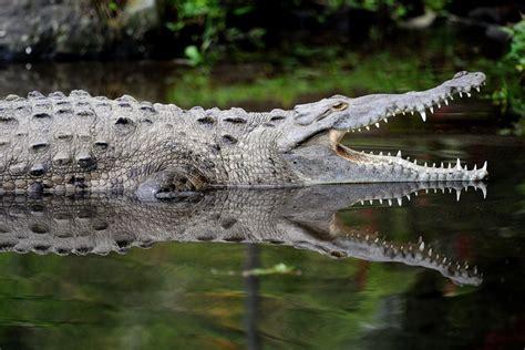 Crocodile Rainforest