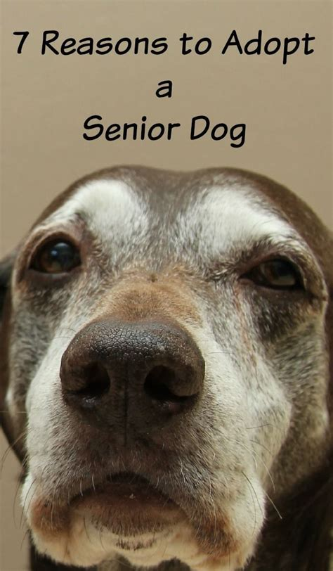 7 Reasons To A Pet by 158 Best Images About Senior Pet On Cats