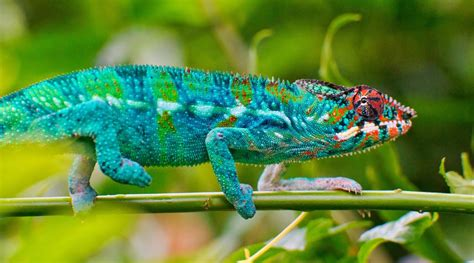 imagenes ojos de reptiles reptiles anatomy and physiology all you need is biology