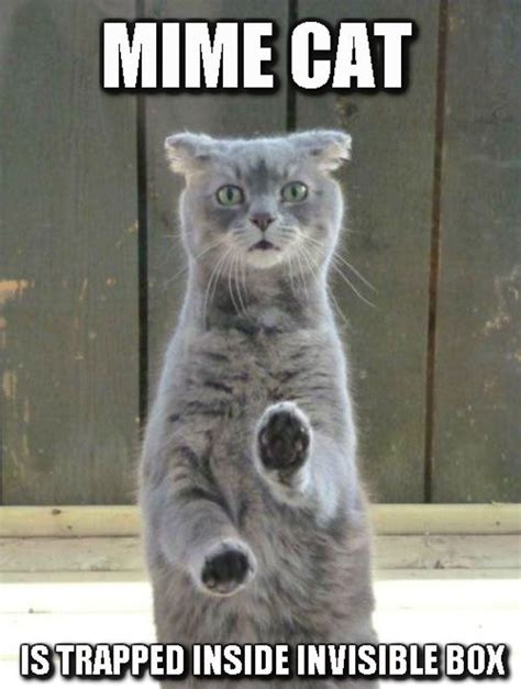 Invisible Cat Memes - 50 best ideas about invisible cat on pinterest cats
