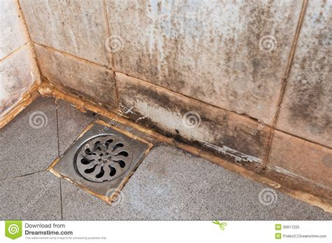mold growing in bathroom mold growing on shower tiles royalty free stock photo