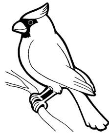 cardinal coloring page cardinal coloring page coloring pages