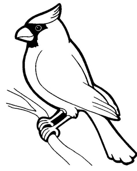 cardinal coloring page coloring pages pinterest