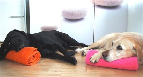 wellness remscheid hundephysiotherapie remscheid monika str 252 ning wellness