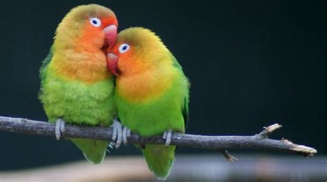 images of love birds hd lovely couple wallpaper love hd wallpapers free