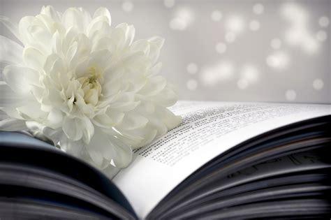 flower books flower chrysanthemum white book page bokeh wallpaper