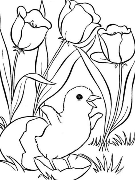 coloring pages of animals and flowers cute little chick and flower spring animal coloring pages
