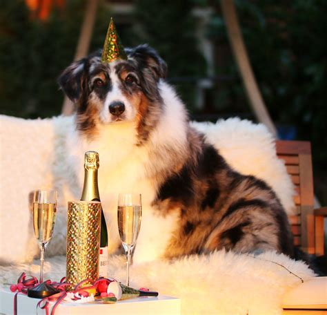 new year for dogs celebrate a new year with a new