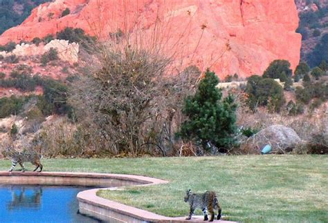 Garden Of The Gods Club by Hotel The Lodge At Garden Of The Gods Club Colorado