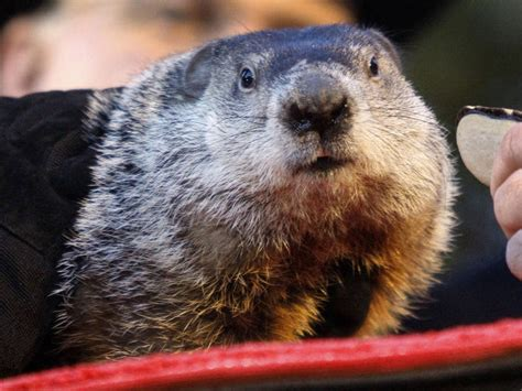 groundhog day weather report ri weather forecast groundhog day snow will be a bother