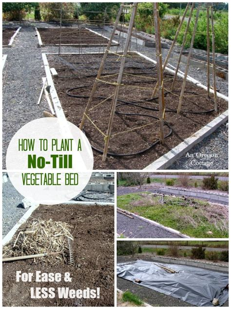 No Till Garden by Planting A Garden Bed The No Till Way Fewer Weeds