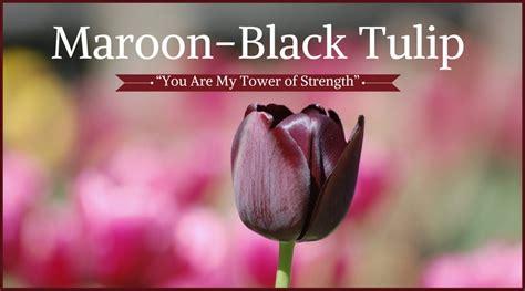 maroon color meaning 100 maroon color meaning what are different soul
