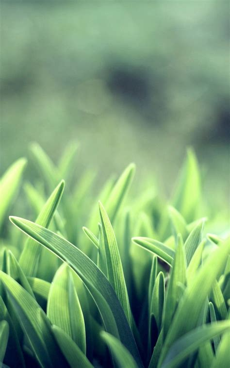 wallpapers for android mobile hd nature hd green grass macro android wallpaper free download
