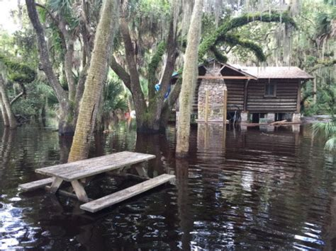 Myakka River State Park Cabins by Play Embracing Flooding At Myakka River State Park