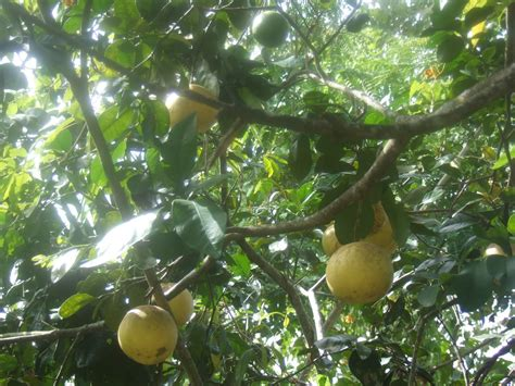 beautiful fruit trees come see the world with me back home one week already